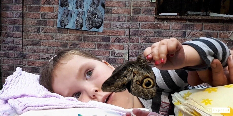 Hannah mit Schmetterling