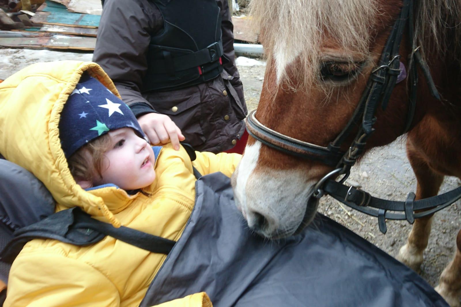 Raphael tierische Begleiter Pferd