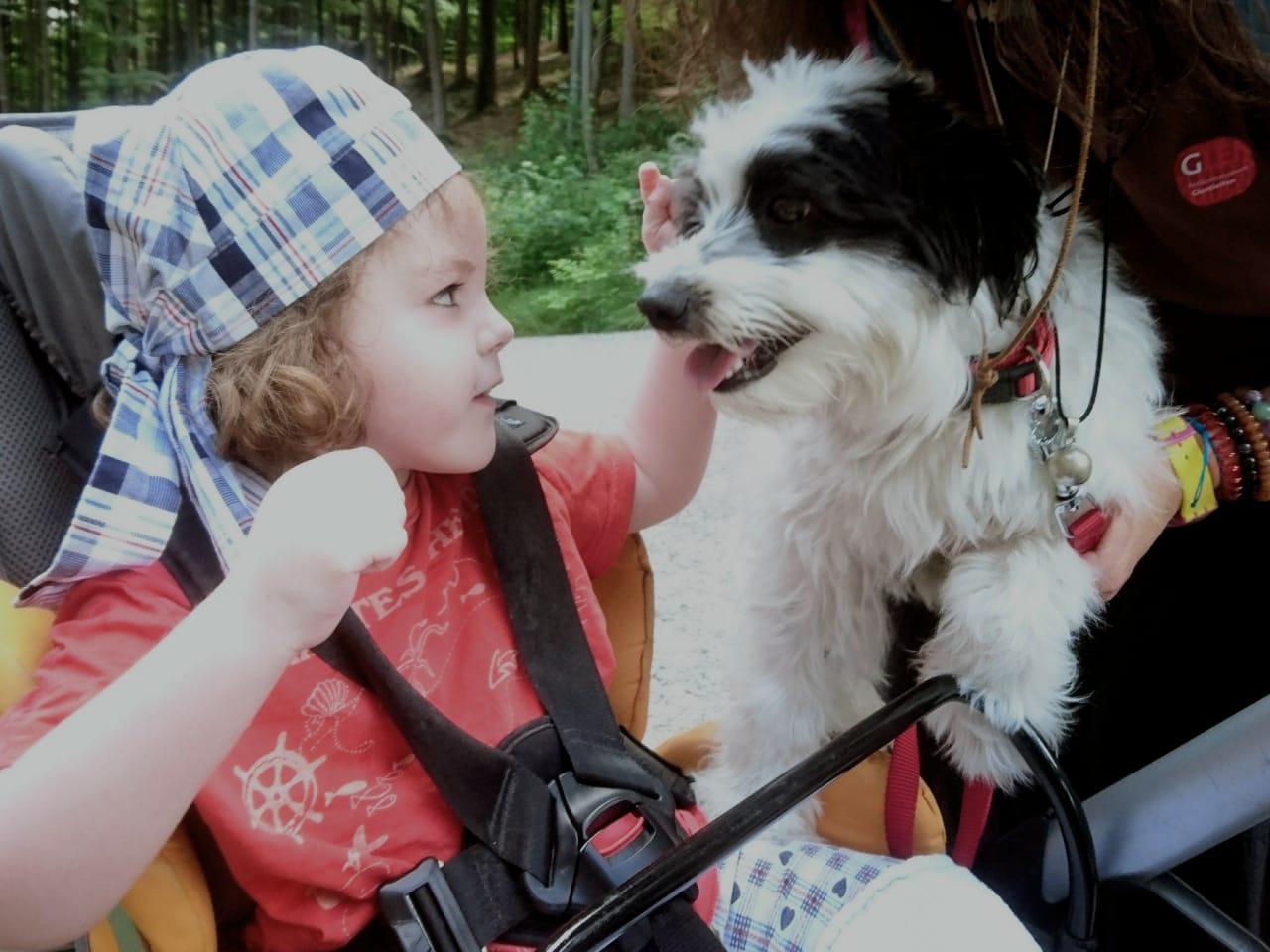 Raphael tierische Begleiter Hund