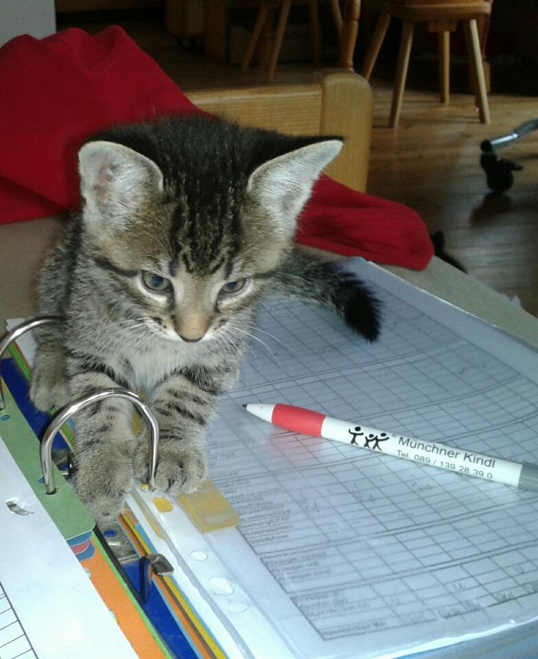 Tierische Begleiter Katze Pflegedoku